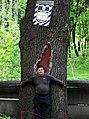 Вікове дерево дуба 02.jpg