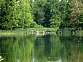 Гатчина. Белое озеро летом.jpg