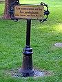 Гомель. Парк. Клён ложноплатановый, или Явор. Фото 01.jpg