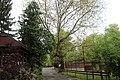 Дендрарій Київського зоопарку (масив дерев) 05.jpg