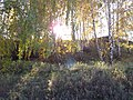 Долина р. Миасс (дер. Прохорово) - panoramio (4).jpg