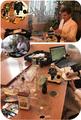 Дослідження рослини стевії (Stevia rebaudiana) та процесів біотрансформації (Bondzyukh N).png