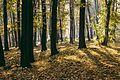 Кошутњак у јесен.jpg