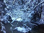 Лесное болото зимой 2014-05-11 09-26.jpg