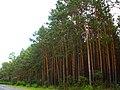 Національний природний парк «Прип'ять-Стохід».jpg