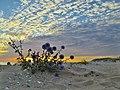 Неймовірні заходи сонця на Кінбурнській косі (6).jpg