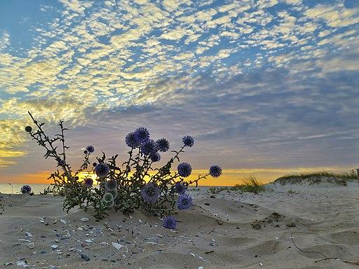 Неймовірні заходи сонця на Кінбурнській косі (6)