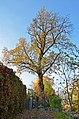 Пам'ятка природи ботанічна Сирецький дуб.jpg