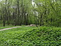 Парк усадьбы Грачёвка.JPG