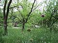Парк шума Гази Баба во мај (166).JPG