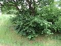Парк шума Гази Баба во мај (77).JPG