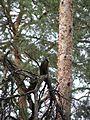 Птица из дерева.jpg
