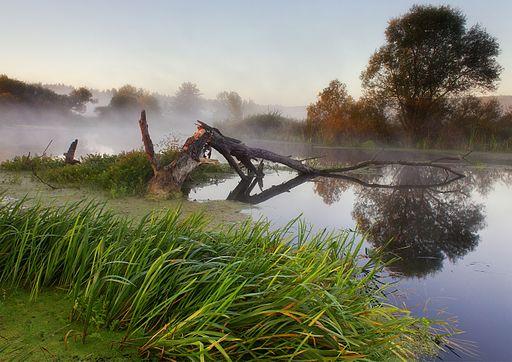 Ранок на річці Вовча