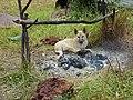 Собачка греется у костра - panoramio.jpg