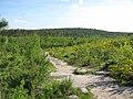Тропинка (Glade near Chertovo Gorodishche) - panoramio.jpg