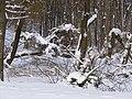 Украина, Киев - Голосеевский лес 91.jpg