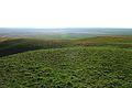 Урочище Утиная гора 13 - panoramio.jpg