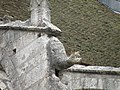 Химера церкви сен-Пьер - panoramio.jpg
