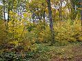 Чорнівський ліс.jpg