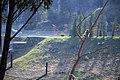 مجموعه عکس از رفتار میمون ها در باغ وحش تفلیس- گرجستان 24.jpg