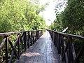 โครงการปลูกป่าชายเลนเฉลิมพระเกรียรติ - panoramio.jpg