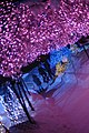 一月の青森市の「光の散歩道」、雪の桜 - panoramio (5).jpg