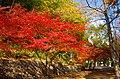 千里緑地 吹田市にて 2013.12.01 - panoramio (1).jpg