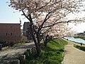 小枝橋付近 - panoramio (2).jpg