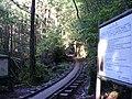 屋久島 - panoramio (11).jpg