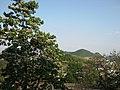 平山 - panoramio (1).jpg