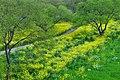 柳風公園 Yanagikaze Park - panoramio.jpg