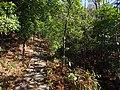 樟林登山道支路 - Zhanglin Mountain Trail Branch - 2015.01 - panoramio.jpg