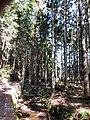 沖野の林道 - panoramio.jpg