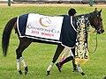 第16回チャンピオンズカップの優勝レイと馬着を着装した勝利馬サンビスタ.JPG