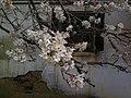 香川県善通寺市善通寺 - panoramio (13).jpg