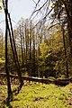 02-Erlenbruchwald.jpg