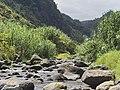 04-08-2019 Madeira Juli 2019 0086 (48904220428).jpg
