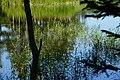 140829 Sanko of Shiretoko Goko Lakes Hokkaido Japan07o.JPG