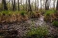 15-05-09-Biosphärenreservat-Schorfheide-Chorin-Totalreservat-Plagefenn-DSCF5531-RalfR.jpg