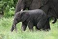 20090507-TZ-NGO Safari 342 (4678028204).jpg