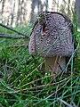 2010-09-07-pilze-by-RalfR-37.jpg