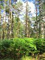20130731Speyrer Wald10.jpg