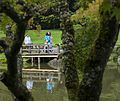 2014 Seattle Japanese Garden Maple Viewing Festival (15552020662).jpg