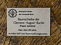 2018-06-18-bonn-meckenheimer-allee-169-botanischer-garten-clemens-august-buche-03.jpg
