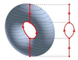 Reeb graph - Reeb graph of the height function on the torus.