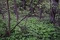 48-49 Рахмановского лесничества.jpg