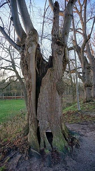 File:7041 's-Heerenberg, Netherlands - panoramio (20).jpg