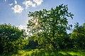 80-361-5046 Kyiv Vichevy Oak SAM 0319.jpg