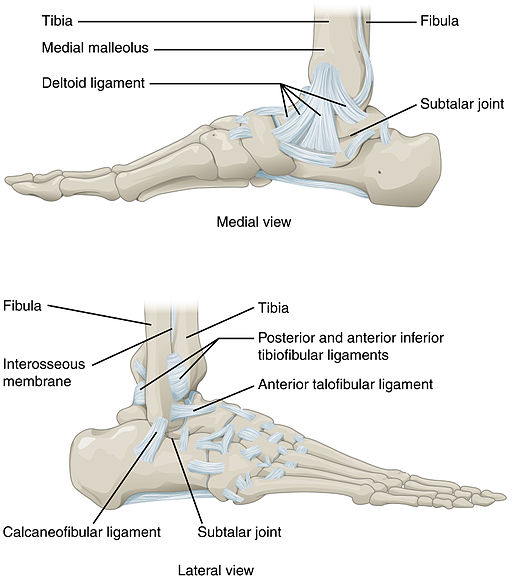 Ankle Feet Joints