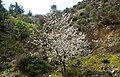 A@a askas village cyprus - panoramio (4).jpg
